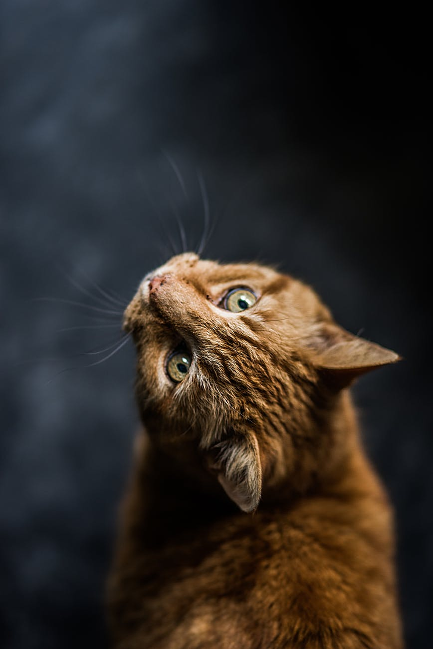 selective focus photography of cat